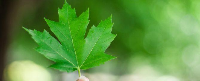 Hoja de árbol color verde greenery 2017.